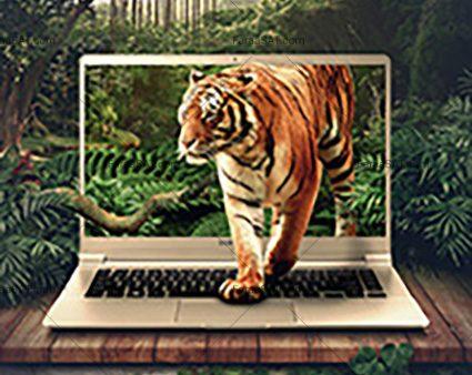 اینترنت، جنگلی جذاب و شگفت انگیز اما پرخطر است.